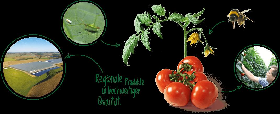 Startseite_wir_leben_nachhaltigkeit